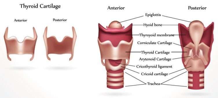 Болезнь Хашимото (аутоиммунный тиреоидит) — лечение, причины, симптомы, диагностика